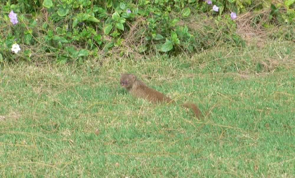 プレー途中に遭遇したかわいらしい動物