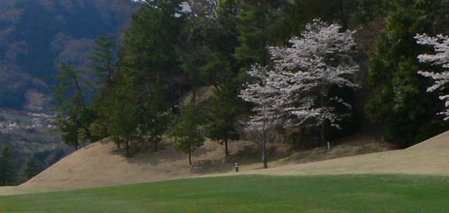 リンドウコース5番の桜