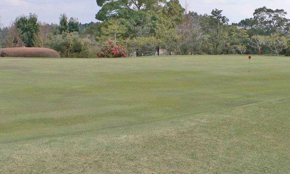 立野クラシック・ゴルフ倶楽部の練習グリーン
